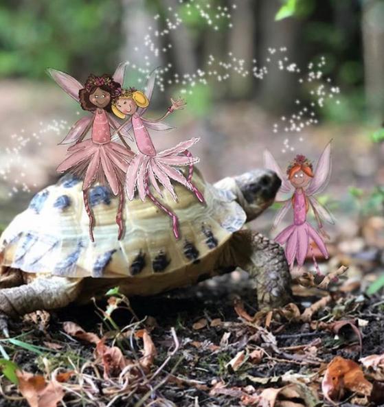 Tortoise fairies